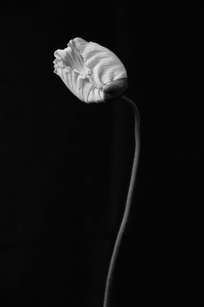 fleur0325